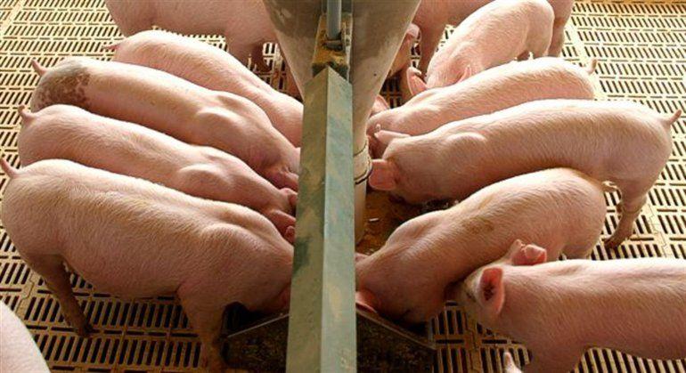 Presentarán un amparo para evitar el ingreso de carne de cerdo