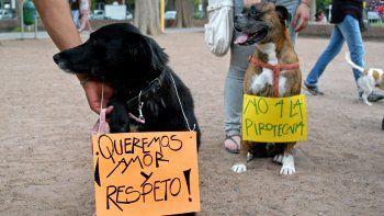 Desde hace años los proteccionistas marchan para reclamar la prohibición de la pirotecnia en la ciudad.