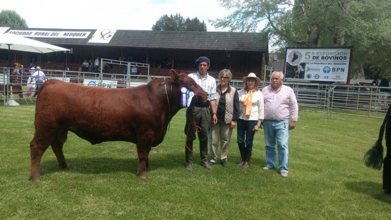 Un toro de Luis Beltrán, campeón en la quinta Expo Bovina de Neuquén