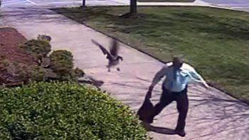 Un ganso atacó a un policía que pisó su territorio