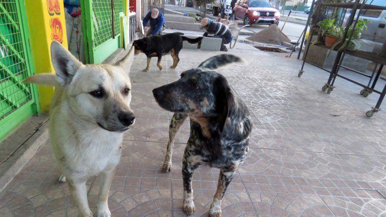 Querían multar a quienes den de comer a perros de la calle y hubo polémica