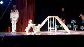 multaron a un circo que utilizaba perros caniches en sus funciones
