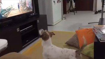 Conocé al perro fanático de la canción Despacito