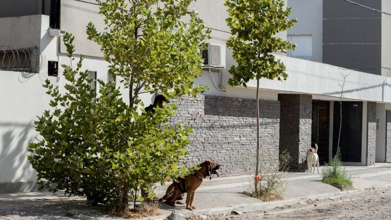 Con perros, buscan a Julieta Sánchez en todo el país