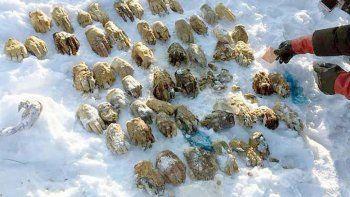 Macabro: encuentran 27 pares de manos en un río congelado