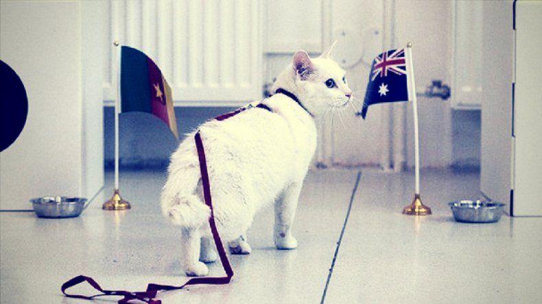 El gato Aquiles reemplazará al pulpo Paul en Rusia 2018