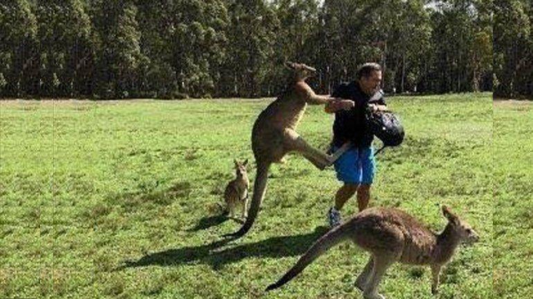 Canguros adictos a las zanahorias atacan a turistas en Australia