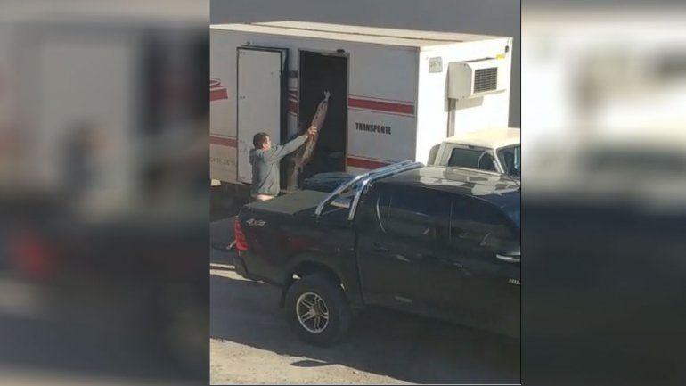 Bajo la lupa: parrillero de la región fue escrachado en un video