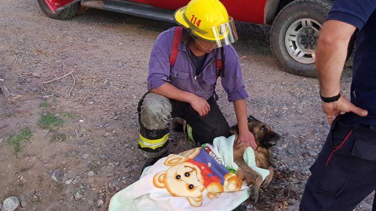 Bomberos de Centenario rescataron a un perro con hipotermia