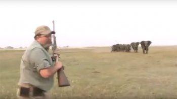 Manada de elefantes busca vengar la muerte de su líder