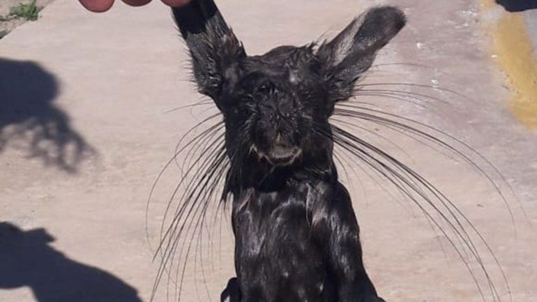 Apareció un extraño animal y atemorizó a todo un pueblo en Neuquén
