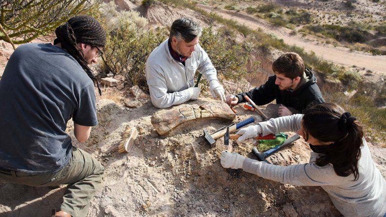 Estudiantes de la UNCo encontraron restos de un dinosaurio en el campus de la universidad