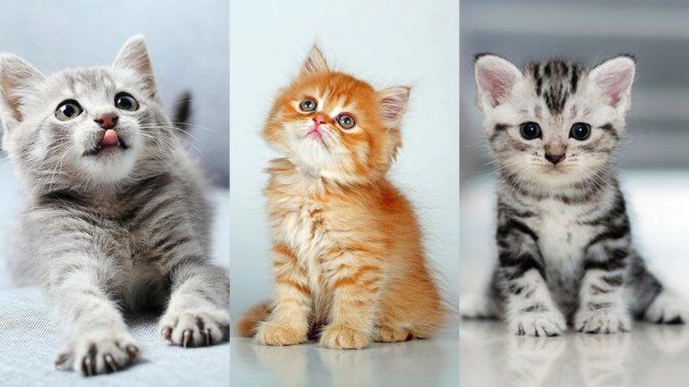 Por qué hay tres fechas en las que se celebra el Día del Gato