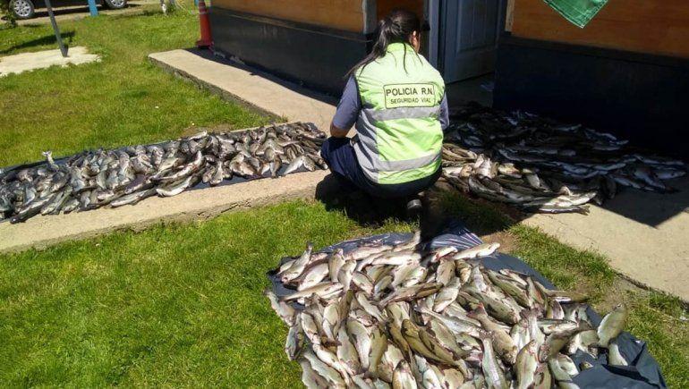 Pesca furtiva: los atrapan trasladando 500 truchas