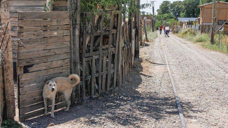 Doce niños se contagiaron de sarna de perros callejeros