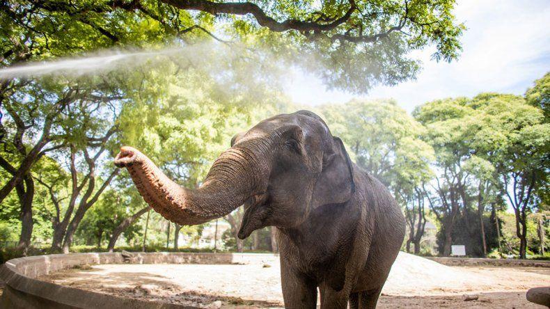 La elefanta Mara sí puede salir de viaje