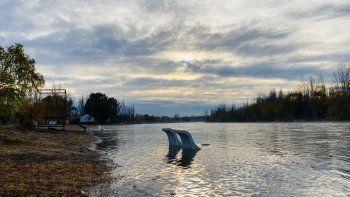 alertan por la subida del caudal en el rio limay