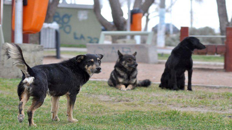 El Municipio quiere castrar 3000 canes durante todo el 2017