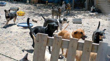 tras las denuncias, la muni defendio su trabajo en la guarderia canina
