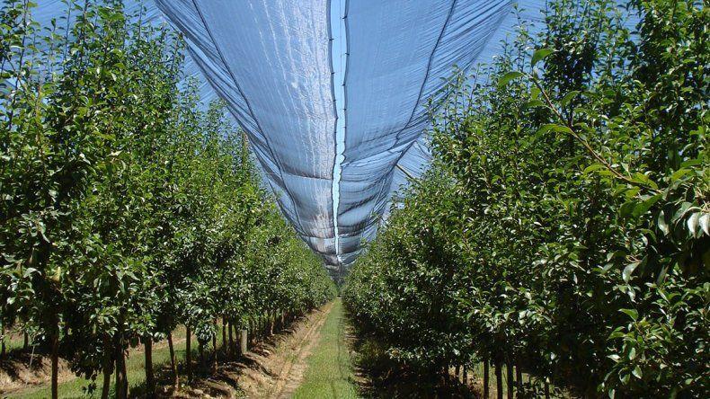 Fruticultura busca alejar el fantasma del granizo
