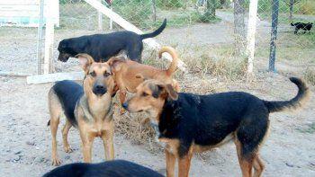 El Municipio y las protectores de animales trabajan por las mascotas.
