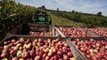 piden tratar ley de emergencia para la produccion de peras y manzanas