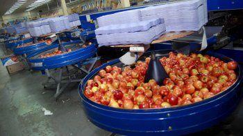 aumentan los reintegros por exportaciones de frutas