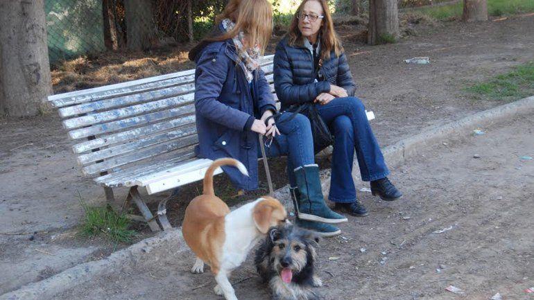 La comuna busca fijar más condiciones para el cuidado de los canes.