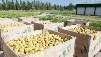 La fruta de Oro se venderá en el mercado comunitario de Bariloche.