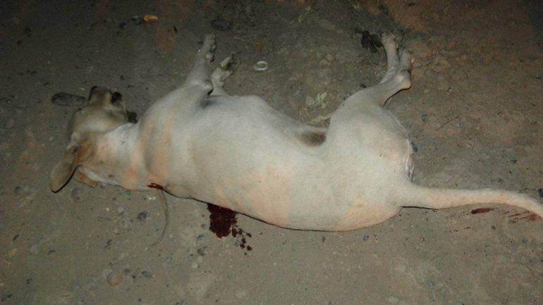 Baleó a un perro y lo escracharon en Facebook en Allen