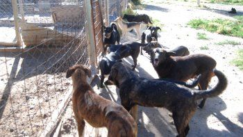 Hay muchos perros heridos y viviendo en pésimo estado en el refugio.