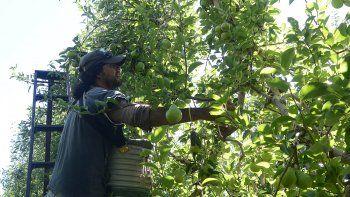 cafi le oferto a los rurales 26 % de aumento para la cosecha