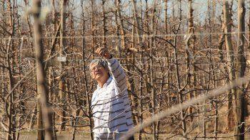 La Provincia impulsa una reconversión de frutales, sistemas y tecnología para bajar costos.