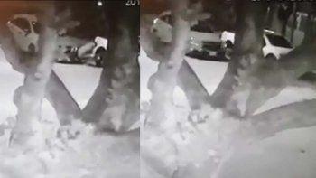 las camaras de seguridad captaron el ataque de una banda de robarruedas en cipolletti