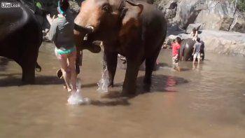 Una joven fue brutalmente golpeada por un elefante