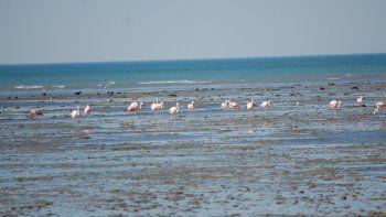 Hasta marzo, distintas especies migratorias harán escala en SAO.