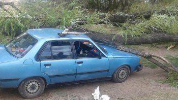 El tronco aplastó el auto y las ramas alcanzaron a la mujer, que estaba cerca.
