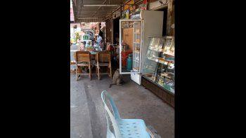 Un mono ladrón se robó un sachet de leche de un tienda