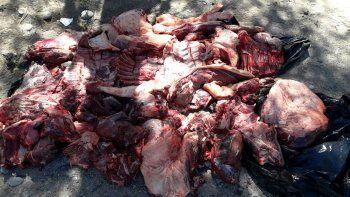 Decomisan 450 kilos de carne escondidos en dos Hilux