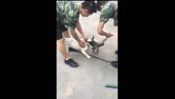 Un perro robó una serpiente e inició una persecución
