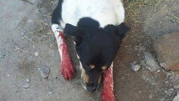 El animal sufrió una herida grave y murió poco después.