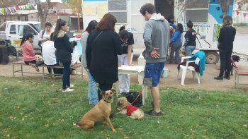 Los perros tienen que ser atendidos y esterilizados en la ciudad.
