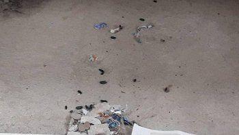 denuncian la presencia de ratas en escuelas cipolenas