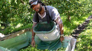 Los productores aseguran que los galpones no les pagan nunca la cifra que les prometen al recibir la fruta.