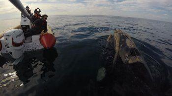 Se acerca cada día más la temporada de avistaje de ballenas