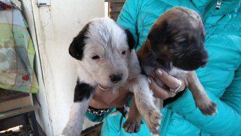 Dos de los cachorros que necesitarán de una familia que los ampare.