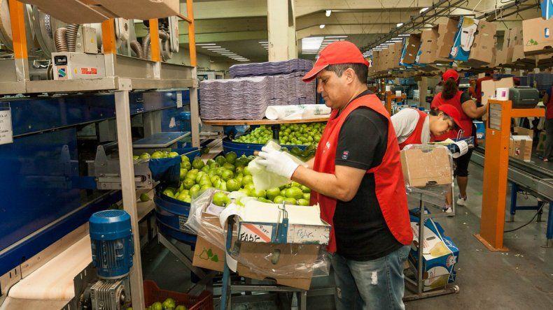 El Gobierno de Río Negro propone la exención total de Ingresos Brutos para la fruticultura