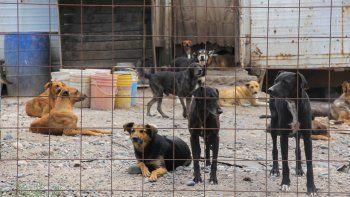 La política de castración es la más efectiva para evitar el crecimiento descontrolado de la población de perros y gatos en la ciudad.