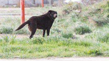 Los canes que andan en la calle pueden traer complicaciones.