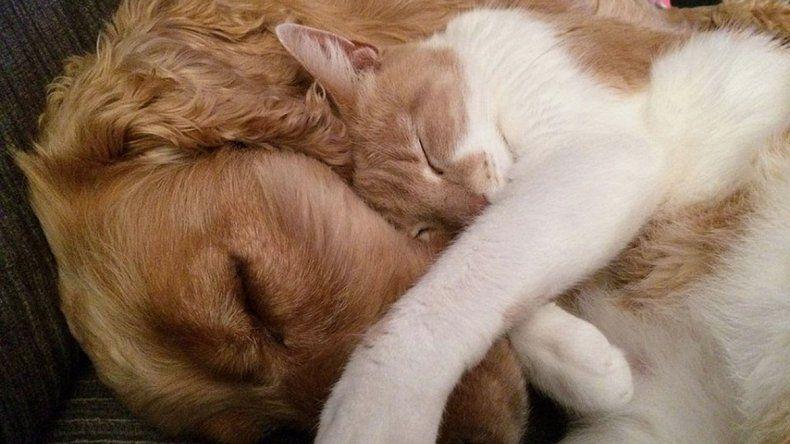 Los turnos online para castraciones de mascotas fueron un éxito